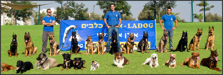 אילוף כלבים במרכז - LADOG - צוות המאלפים