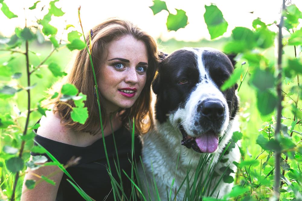 כלב רועים אסיאתי בוגר - LADOG - מרכז מקצועי לאילוף כלבים
