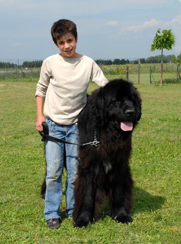 ניופאודלנד נחשב לכלב משפחה מעולה-LADOG