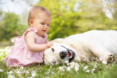 גידול נכון של כלבים וילדים-LADOG