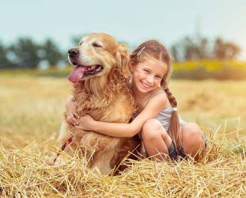 אילוף כלבי גולדן רטריבר לגידו במשפחה- LADOG