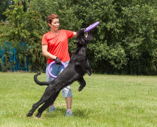 פיתוח יצר המשחק לכלבי שנאוצר-LADOG