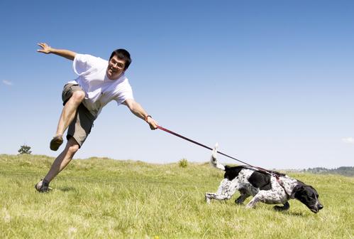 כלב שלא למד הליכה נכונה והתחשל לתיקון-LADOG