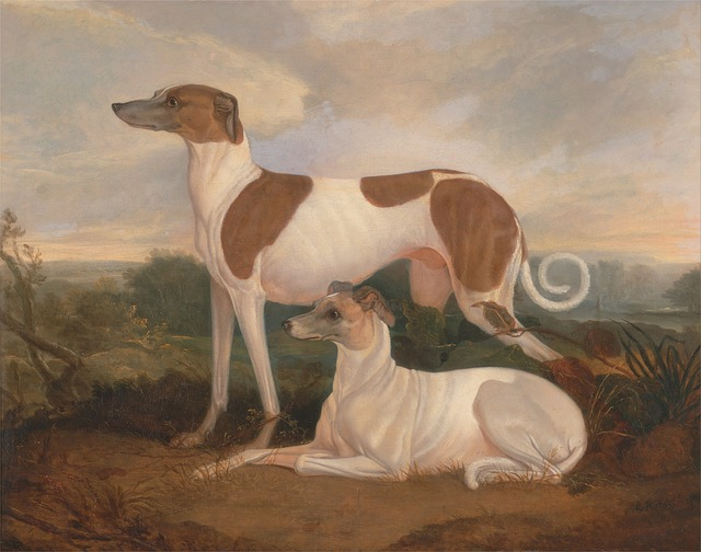 ציורים עתיקים של כלבי גריי האונד - LADOG