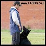 איך לאלף כלב