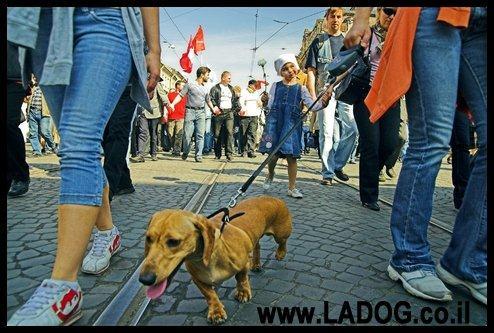 חשיפה נכונה של גורים למקומות שונים ורועשים מפתחת את ביטחונו של הכלב בעתיד- LADOG