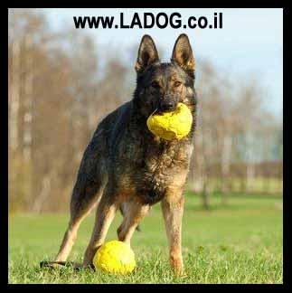 כלבי עבודה