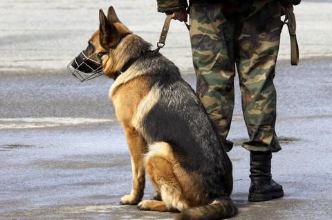 שימוש ברועה גרמני ברוב צבאות העולם-LADOG