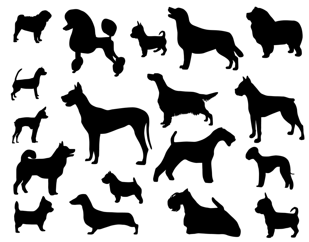 סוגי כלבים- גזעי כלבים - LADOG