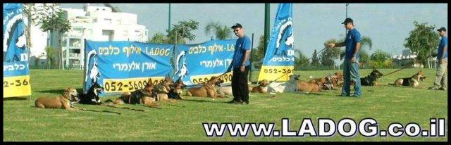 קורס מאלפי כלבים לומדים בחברת LADOG