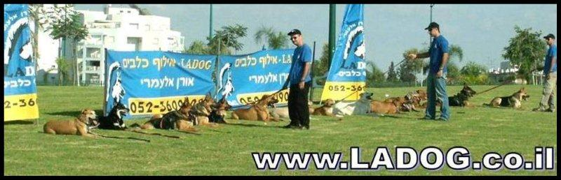 אילוף כלבים מקצועי- LADOG