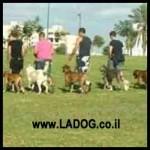 אילוף כלבים במרכז