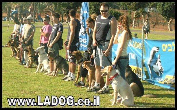 חשיפה נכונה לכלבים ואנשים בקורס אילוף בחברת LADOG