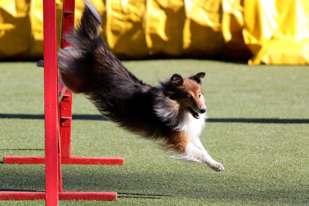 אילוף מקצועי לכלב שלטי - LADOG