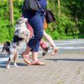 קפיצות כלבים על אנשים - LADOG