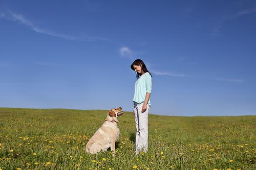 שילוב מאוזן בין חיזוק חיובי לחיזוק שלילי- מתאים למשמעת בגירויים, וגורם לכלב ליהנות באילוף-LADOG