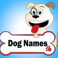 שמות של כלבים - LADOG