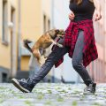 אוננות כלבים - LADOG - אילוף כלבים מקצועי