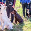 אילוף כלבים בקבוצה- LADOG
