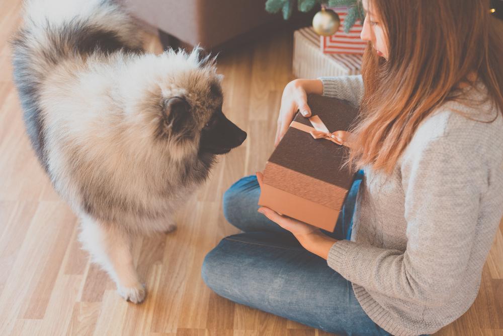 כלבי קייסהאונד מתאים לגידול בדירה - LADOG - אילוף כלבים