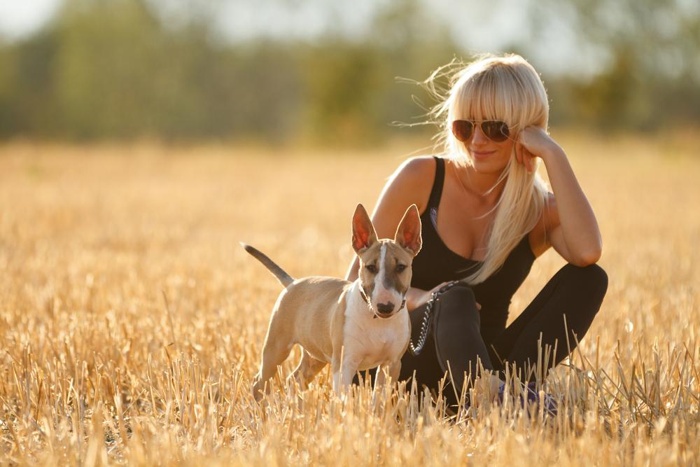 בול טרייר צעיר - LADOG - מרכז מקצועי לאילוף כלבים