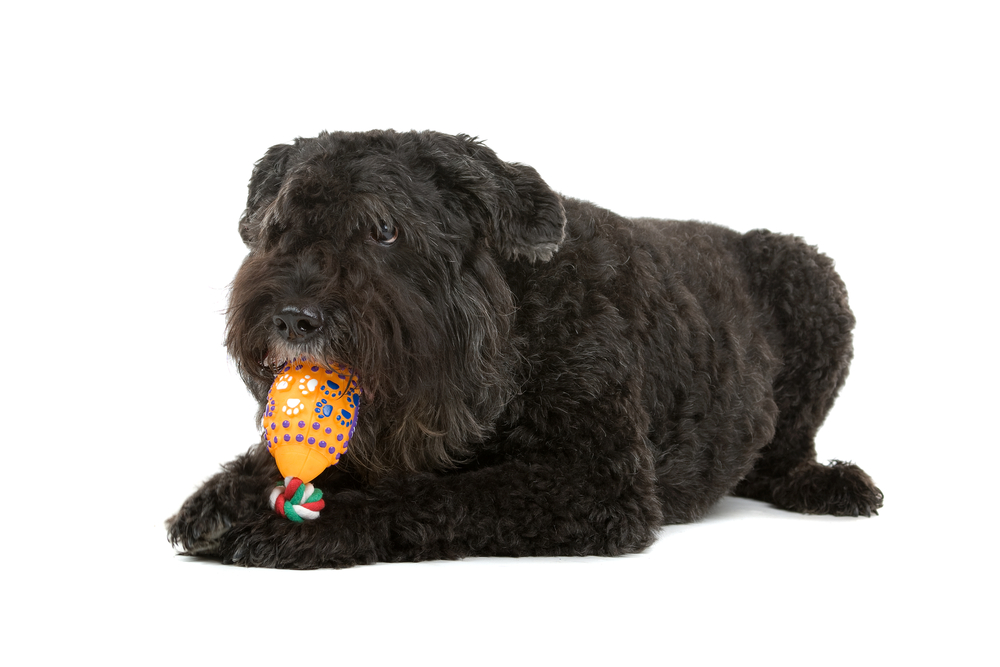 לבוביה יצר משחק חזק - LADOG- אימון כלבים