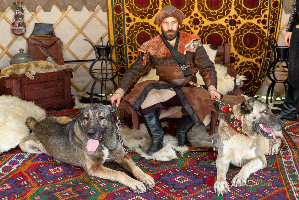 רועה טורקי - קנגל - מתאים מאוד לשמש ככלב לשמירה על שטח - LADOG - אילוף כלבים מקצועי