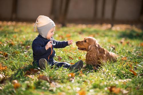 איך לאלף כלבים להסתדר עם ילדים-LADOG