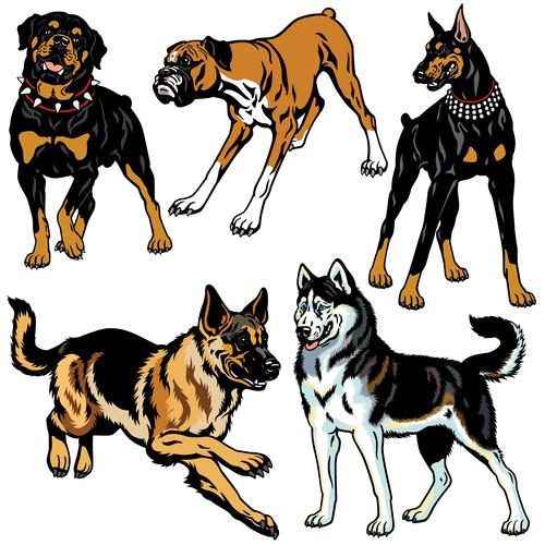 שפת גוף של תוקפנות כלבים-LADOG