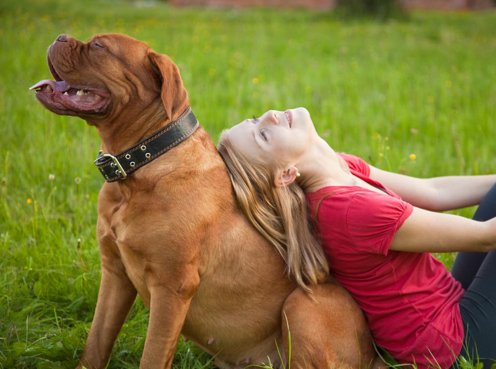 דוג גה בורדו יכול להיות כלב משפחה מעולה כשמבצעים תרגילי היררכיה בגיל צעיר (במיוחד הנקבות שהן טובות יותר לילדים) - LADOG - אילוף מקצועי