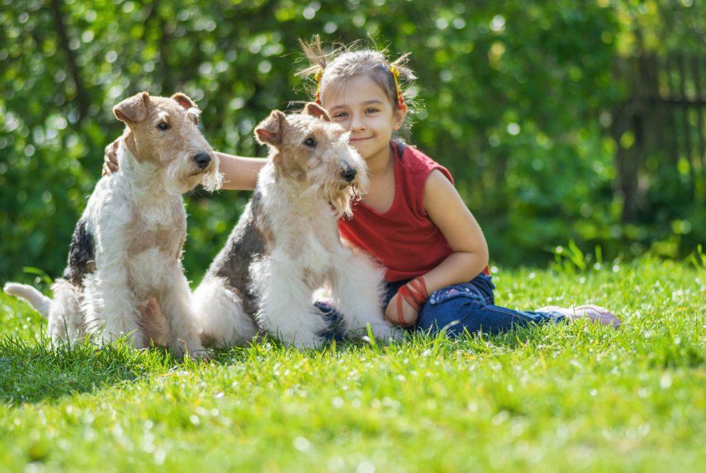 לגידול עם ילדים עדיף פוקס טרייר נקבה - LADOG