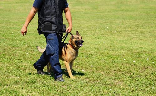 אילוף כלבים להליכה נכונה-LADOG