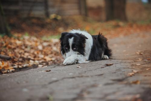 שיטת התיקונים בלבד-אילוף ללא צ'ופרים ומשחקים-יכול לגרום לכלב לעשות את הפקודות ללא שמחת חיים-LADOG