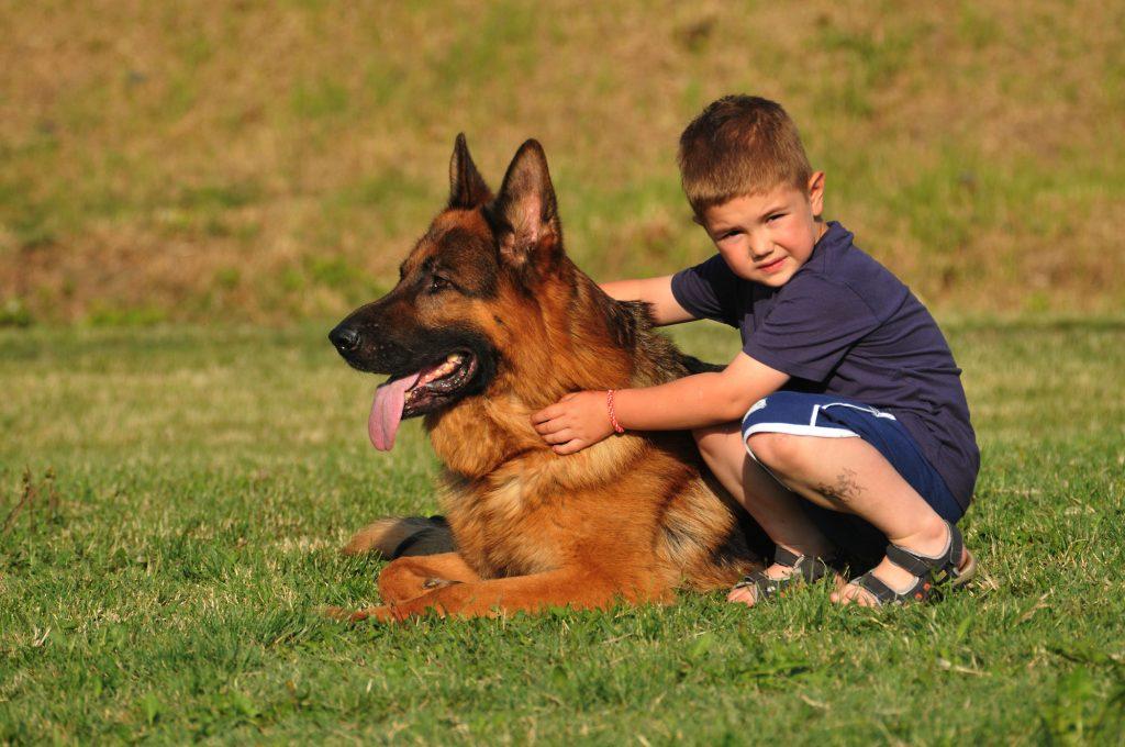 כלבי משפחה מעולים - LADOG