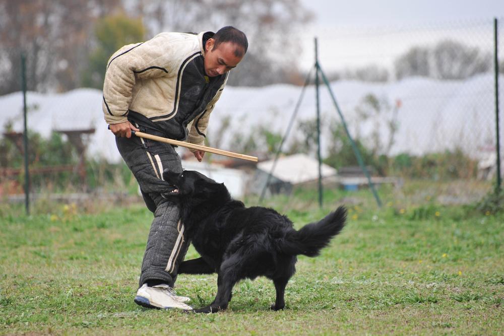 גרוננדל נחשב לכלב הגנה מעולה - LADOG