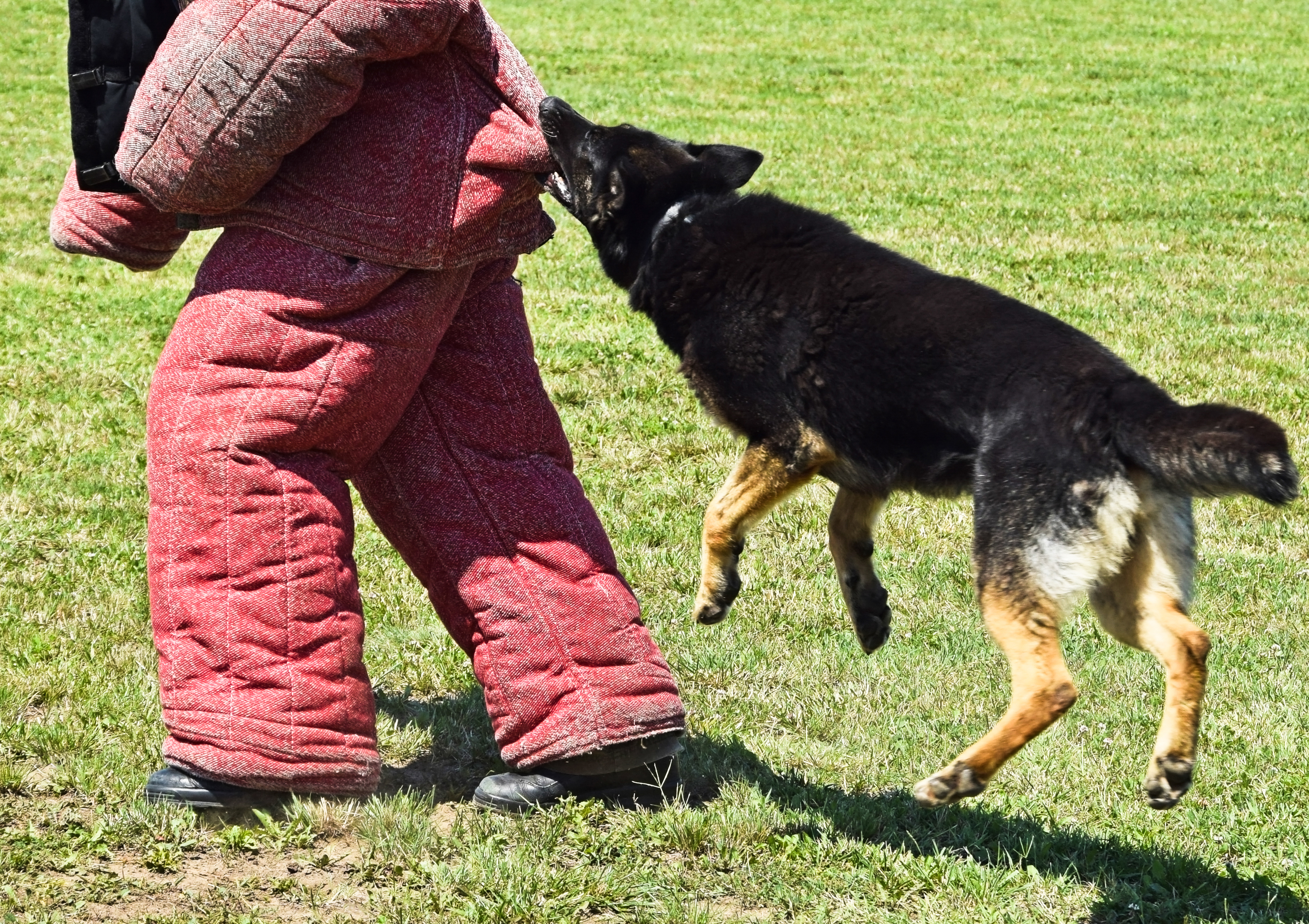 שימוש ביצרים הטבעיים של הכלב- מתאים לאילוף להגנה-LADOG