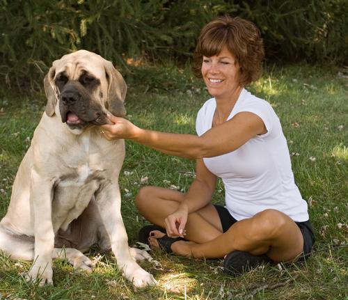 גור מתבגר של מסטיף אנגלי-LADOG אילוף מקצועי לכלבי ענק