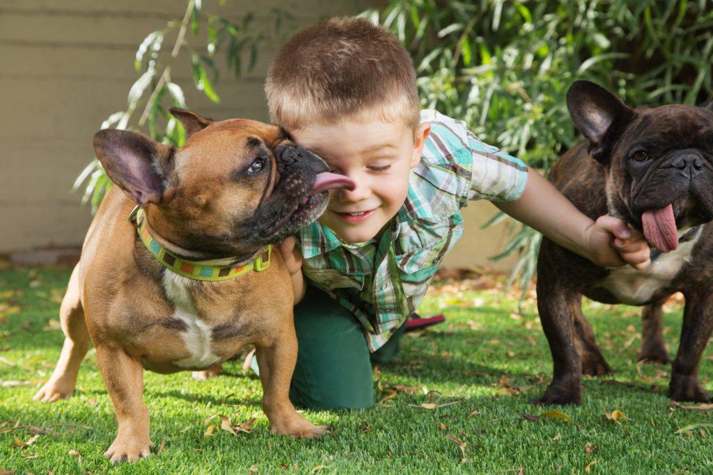 כלב בולדוג צרפתי נחשב לכלב מצויין לילדיםׁ(במיוחד נקבות) - LADOG