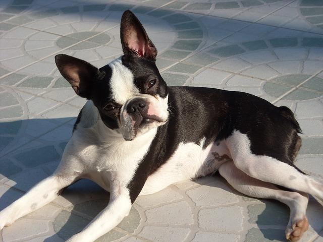 canine-634020_640