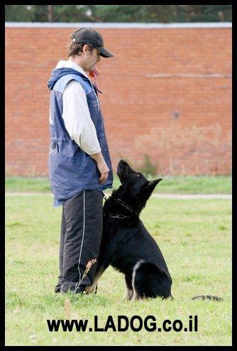 איך לאלף כלב - LADOG- אילוף כלבים