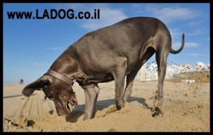חפירות כלבים בחצר - LADOG - אילוף מקצועי