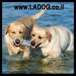 התנהגות כלבים להקה