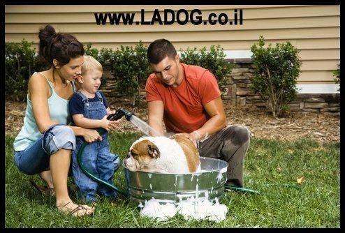 איך לאלף כלב לתינוק חדש בבית-LADOG