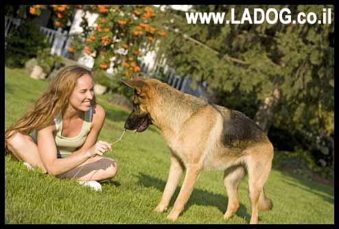 טיפול בכלב רועה גרמני - LADOG