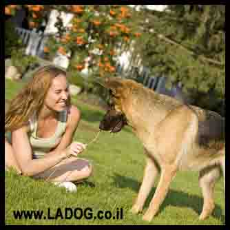 טיפול מומלץ לכלב רועה גרמני