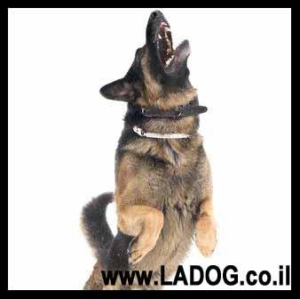 כלבי שמירה